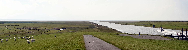 Deichvorland am Friedrichskooger Hafen