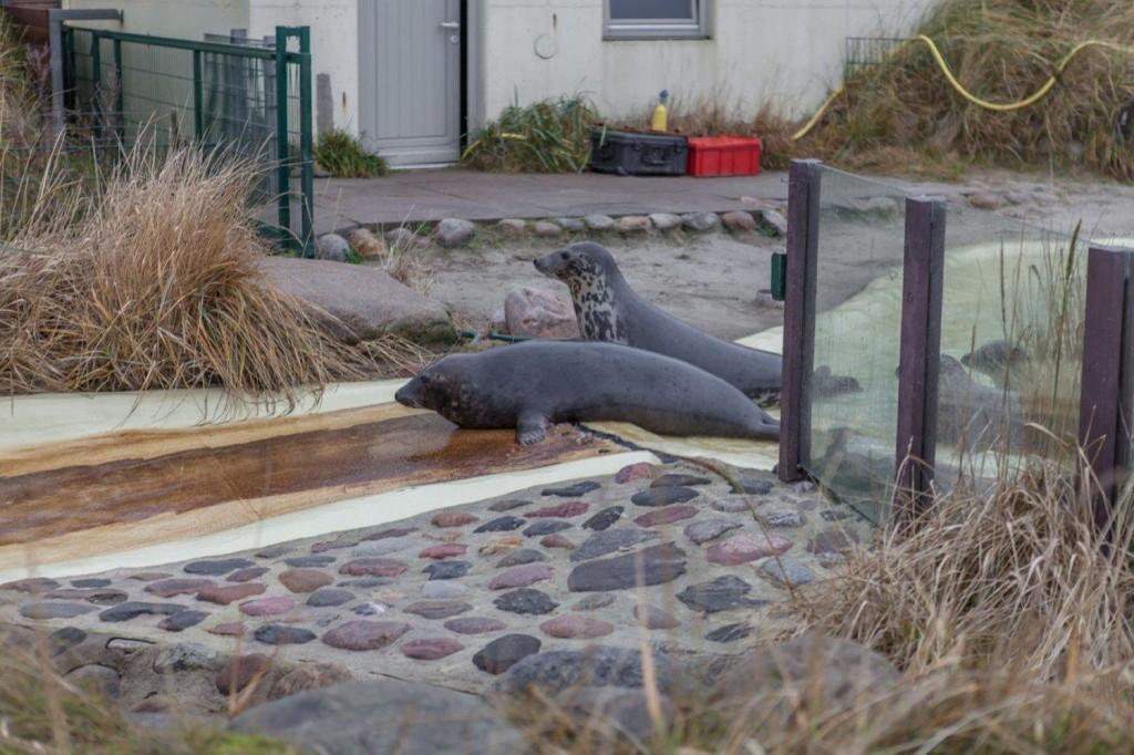 Fütterung in der Seehundstation Friedrichskoog